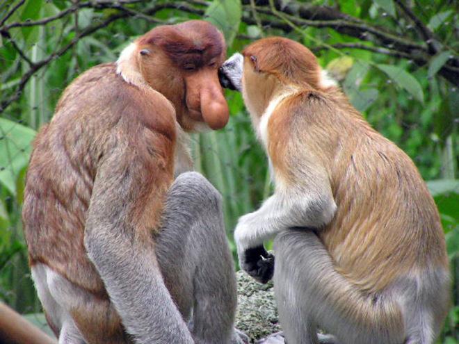 Животные Азии, которых Всемирный фонд дикой природы взял под защиту в 2015 году