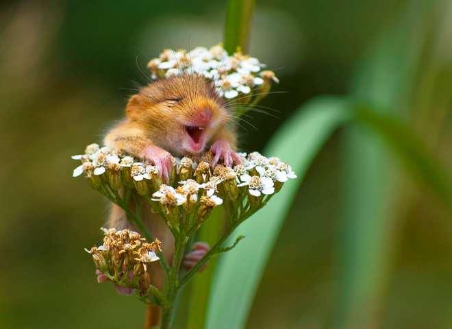 Самые смешные фото животных