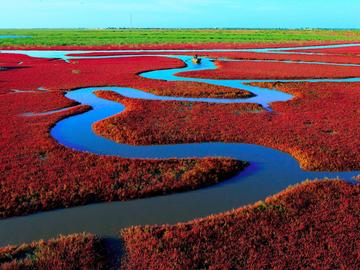 Найкрасивіші місця в світі: Червоний пляж, гордість Китаю