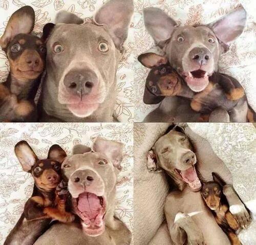 Самое классное селфи собак