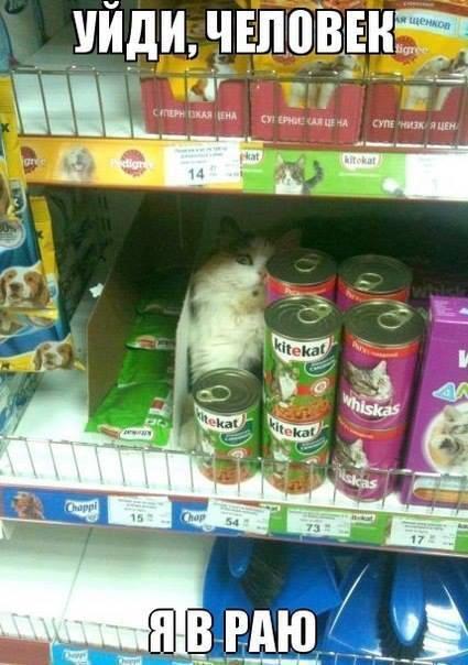 Котейка нашла Рай