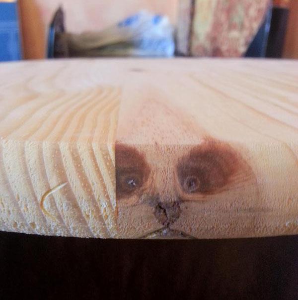 Удивленный енот... или ошарашенная панда