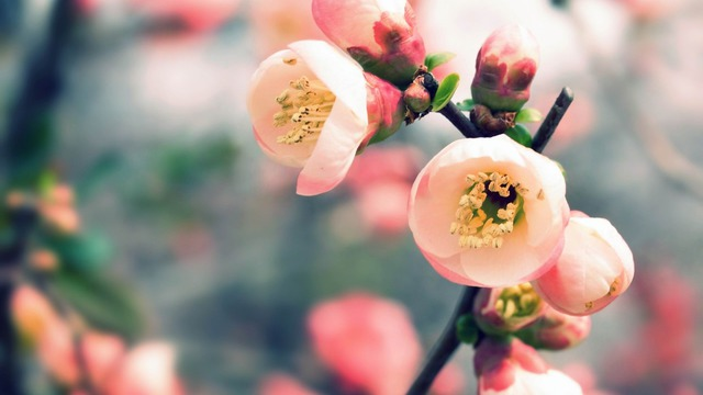 Весна за окном