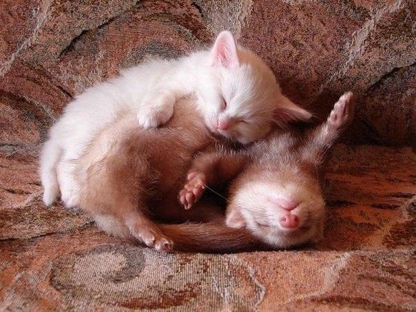 Ты - моя подушка!
