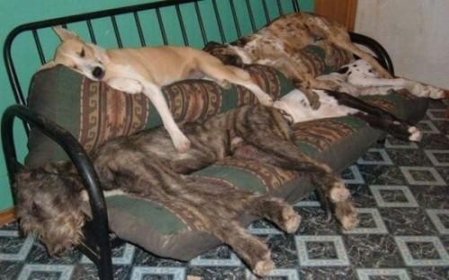 Собака кровати