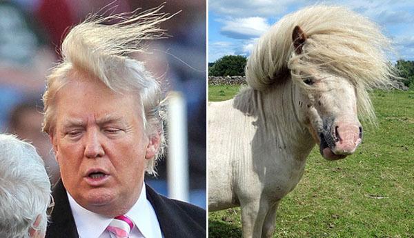 Невероятное сходства. Трамп и ... (6 картинок)