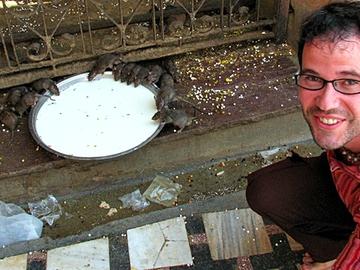 Шри Карни Мата: восьмое чудо света для индийцев