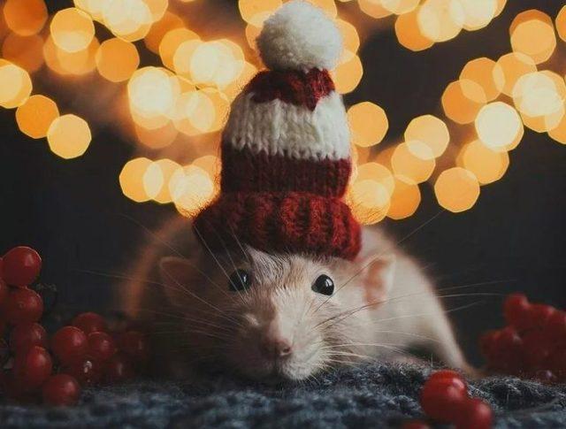 Няшная открытка с Новым годом крысы 2020