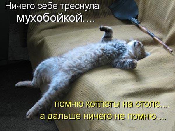 Подборка прикольных котоматриц