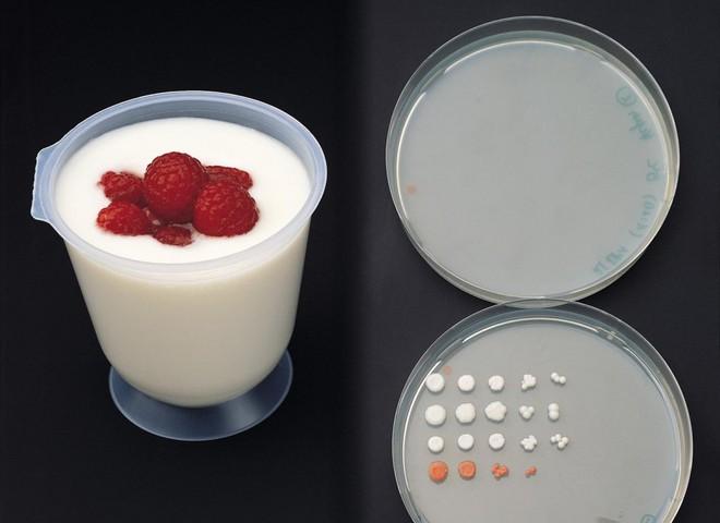 Йогурт спасет от стресса