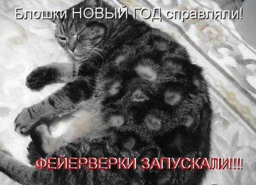 Отпадные котоматрицы