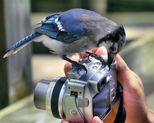 Лучшие фотографы 21 века