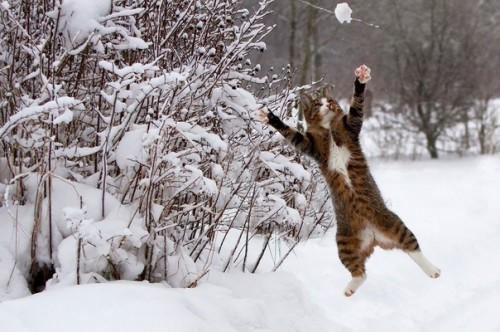 Веселые приколы про котов