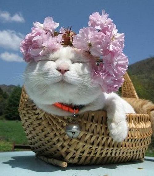 Я сплела себе веночек: здесь цветок, а здесь цветочек!