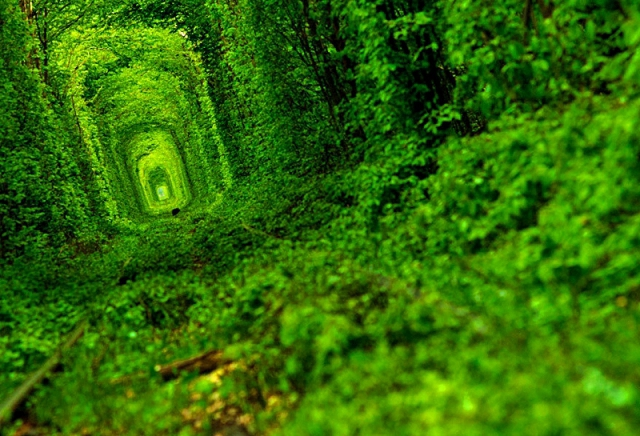 Куда поехать на майские 2012: Тоннель любви в Ровно