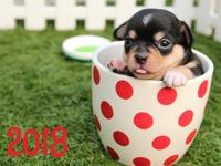 С Новым годом собаки 208