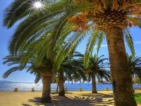 Пальмы под летним солнцем