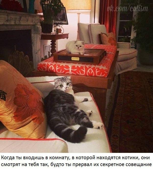 Владельцам 2 котов посвящается