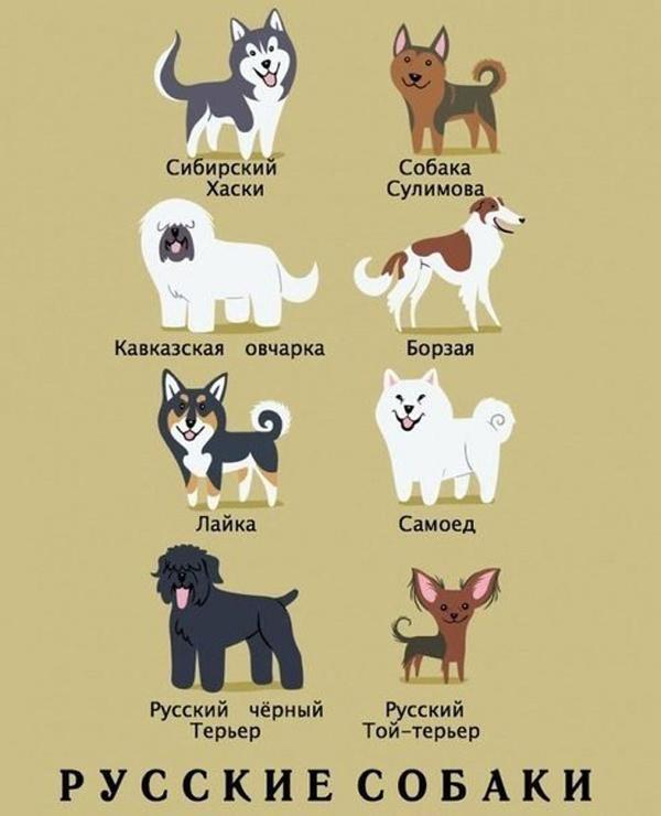 Откуда собачки родом