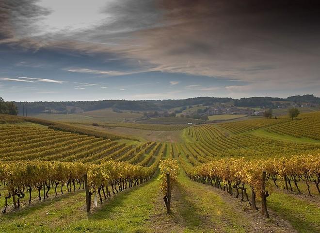 Французское вино покоряет Китай