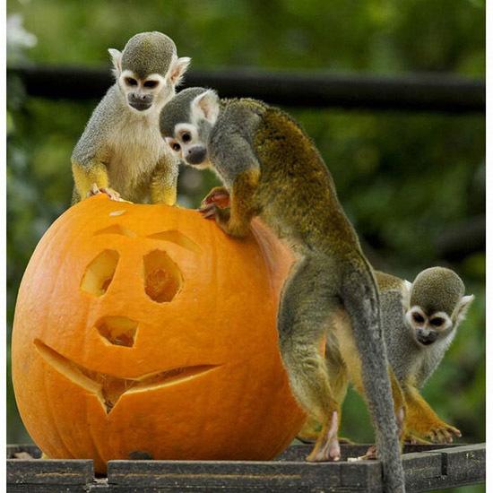 Няшки готовятся к Хэллоуину (ч.2)