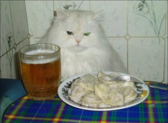 Прикольные картинки про котов