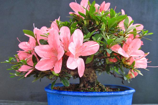 5 квітучих кімнатних рослин, які люблять прохолоду