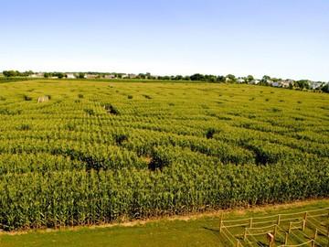 У Києві створили гігантський лабіринт у кукурудзяному полі в формі карти України