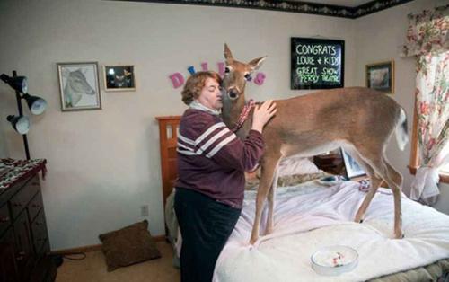 10 необычных домашних любимцев