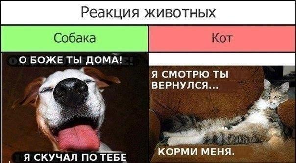 Реакция животных на приход хозяина