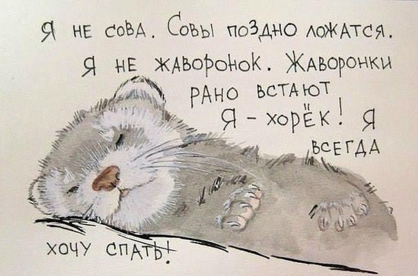 смешные картинки хочу спать