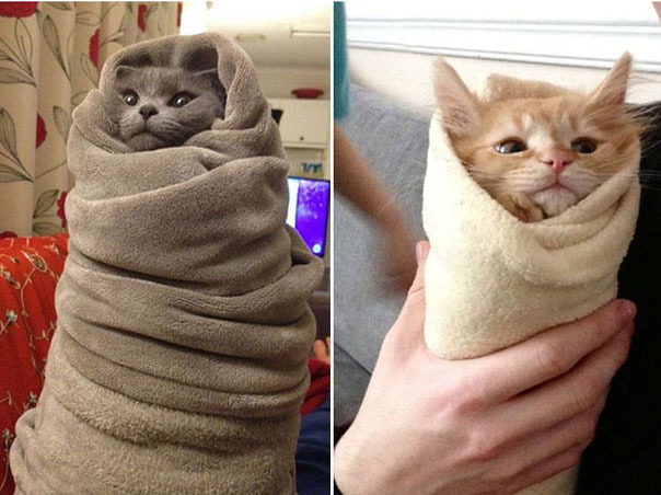 Пирожки с котятами