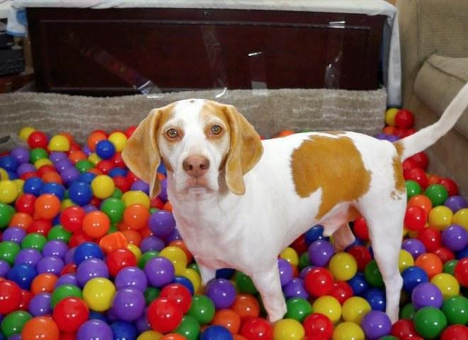 Напевно, кращий сюрприз собаці на День народження
