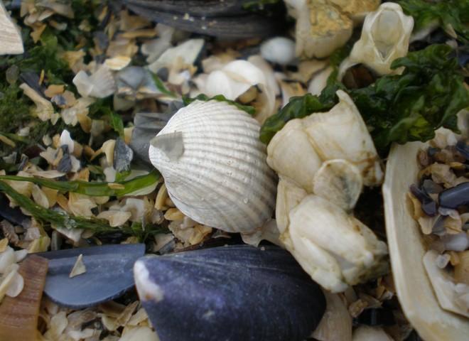 Морские ракушки: твори и фантазируй