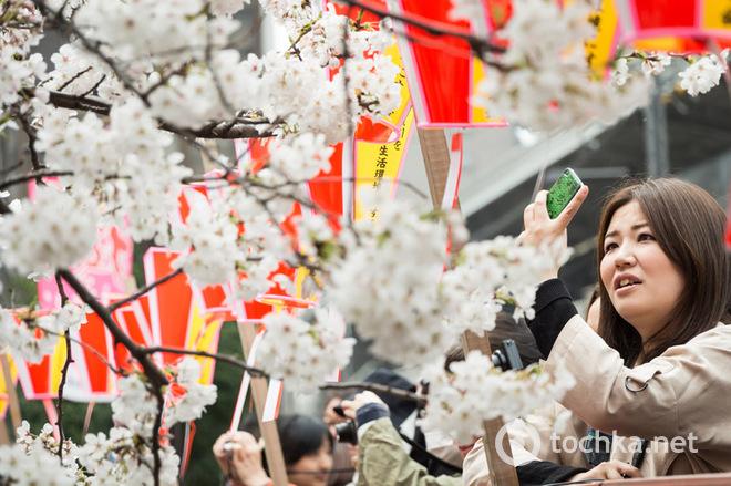 Саме весняне свято: О-ханами в Японії