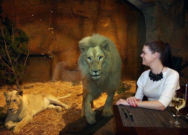 Отель с дикими животными: Jamala Wildlife Lodge