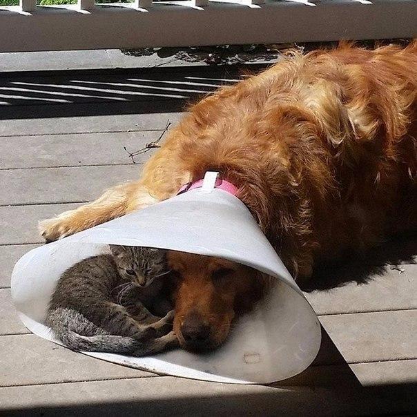 Моральная поддержка больного друга