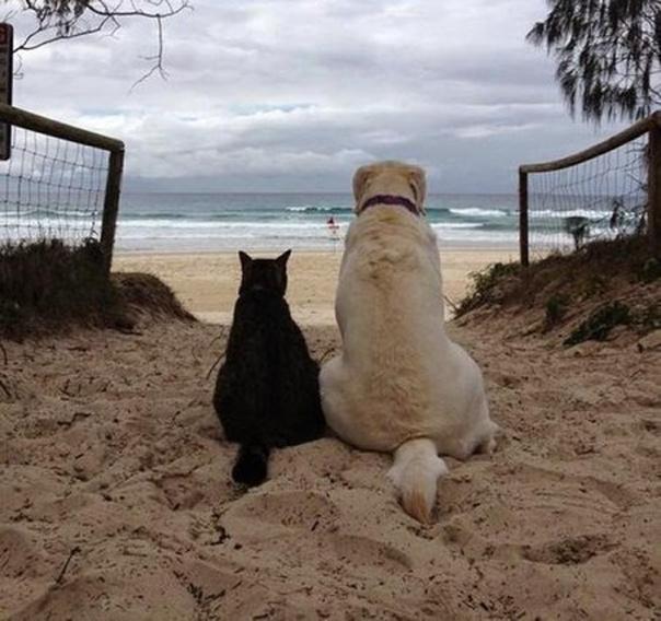 Живут как кошка с собакой!