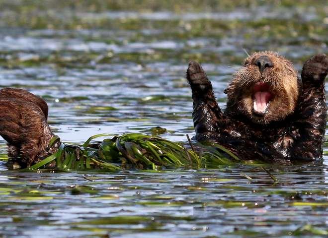 Найсмішніші фото тварин