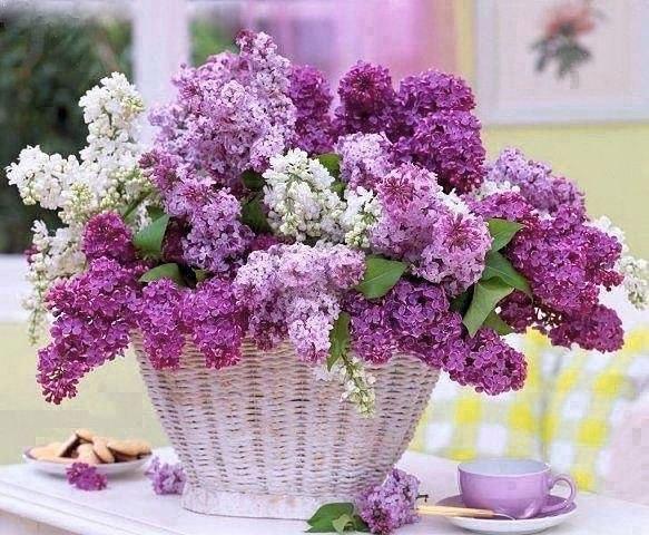 фото открытки цветы красивые