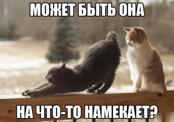 Весна пришла, кошки выходят на улицу
