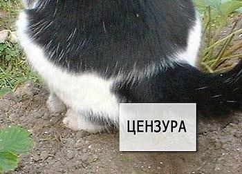 Подборка приколов про котэ