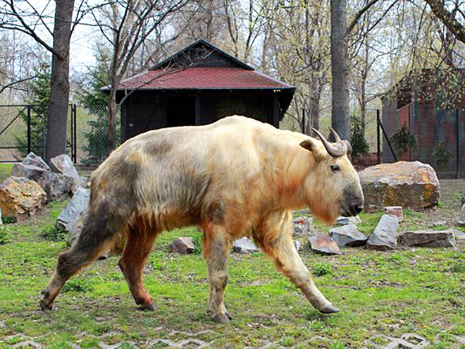 Зоопарк Варшавы