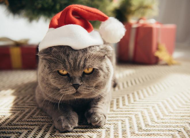 Чому коти валять новорічні ялинки