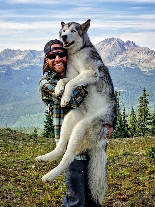 Я подорожую зі своїм собакою