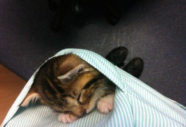 Мир стал бы добрее, если бы у каждого в кармане был котик