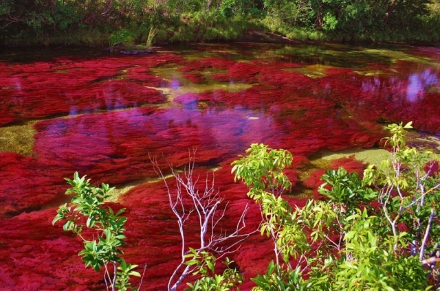 Самая красивая река в мире - Caño Cristales – Кристальная река