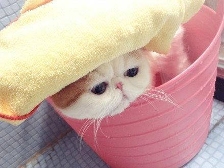 Картинки няшные котики (35 фото) 🔥 Прикольные картинки и юмор | 328x439