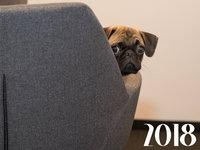 Прикольные открытки на Новый год собаки 2018