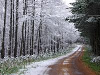 Первый снег в лесу